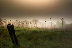 Field (jeanmarie shelton) Tags: morning mist green nature grass fog fence outdoors nikon jeanmarie jeanmarieshelton