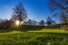 Krusenkoppel Kiel Sunset [explored ] (bhansen.kiel) Tags: wood blue sunset sky sun tree green forest germany deutschland weed outdoor hill lensflare rays blau wald baum kiel schleswigholstein sledge rasen ger hgel explored krusenkoppel