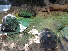 tortuessss (alexandrarougeron) Tags: jaune sable vert lumiere terre animaux salade tortue carapace ecaille