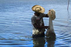 Pescaria (Rita Barreto) Tags: rio brasil pescador nordeste pescaria riosofrancisco guadoce estadodesergipe pescadorcomtarrafa