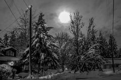 Moon light B/W (Woodmizer62) Tags: winter snow cold idaho moonlight harborisland postfalls