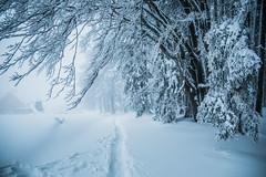 Weiße Pfade (Tria-media_Sven) Tags: travel schnee winter snow nature canon bestof weiss feldberg weis flickrchallengegroup flickrchallengewinner wichtelpfad feldbergerhof canoneos5dmarkiii geotagfeldberg