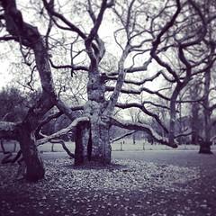 kalheupink #kalheupinkpark #tree #trees #plataan #oldenzaal... (Marcel van Gunst) Tags: park trees tree nature bomen natur natuur boom parc baum twente oldenzaal baume plataan kalheupink kalheupinkpark uploaded:by=flickstagram instagram:photo=114926632961033617055328948 instagram:venuename=oldenzaal instagram:venue=251871752