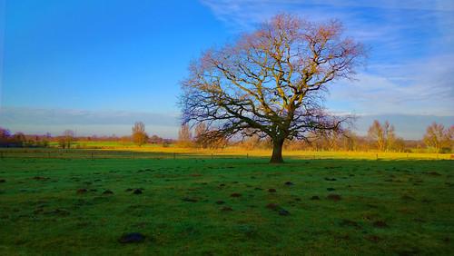 Baum HDR groß