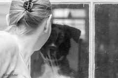 I See You (Uniquability) Tags: autumn dog pet house selfportrait fall window glass animal larchmont