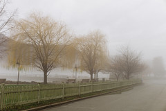 Hudson River fog at Cold Spring (briantf) Tags: newyork tree fog river willow hudsonriver weepingwillow coldspring willowtree
