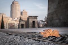 Autumn of Debod (fernando_gm) Tags: madrid plaza city autumn espaa color colour hoja 35mm de temple leaf spain fuji bokeh otoo fujifilm aire libre templo debod xt1