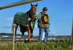 2015-12-19 (18) r6 trainer Patrick Magill with #6 Redheaded Stranger (JLeeFleenor) Tags: photos photography md marylandracing laurelpark marylandhorseracing horses thoroughbreds equine equestrian cheval cavalo cavallo cavall caballo pferd paard perd hevonen hest hestur cal kon konj beygir capall ceffyl cuddy yarraman faras alogo soos kuda uma pfeerd koin حصان кон 马 häst άλογο סוס घोड़ा 馬 koń лошадь chestnut trainers equinedentaltechnician patrickjmagill maryland