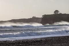 Ano Nuevo State Park-7984 ( / Jiayin Ma) Tags: california park beach water 1 sand state wave route ao ano nuevo seaocean