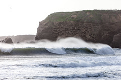 Año Nuevo State Park-7944 (马嘉因 / Jiayin Ma) Tags: california park beach water 1 sand state wave route año ano nuevo seaocean