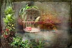 The Caged Parrot (ulli_p) Tags: street light plants green art texture colors thailand colorful asia southeastasia colours bangkok textured likeapainting aworkofart bangkokchinatown flickraward texturedphoto awardtree artofimages exoticimage canoneoskissx5