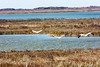 _40A2739 (ChefeGrande) Tags: bird texas feeding marsh seashore texasstatepark whoopingcrane wintermigration protectedspecie