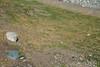 Find a Penguin Here!  Isla Magdalena (silkylemur) Tags: ocean chile cruise sea patagonia seascape southamerica pinguinos canon lens landscape tierradelfuego island penguins ship fullframe canoneos ona magallanes zoomlens endoftheworld beaglechannel chilena puntaarenas findelmundo islamagdalena landscapephotography magellanicpenguins llens 24105mm canonef canonef24105mmf4l canonef24105mmf4lisusm キャノン magdalenaisland eflens patagoniachilena selknam canonef24105mmf4lisusmlens efmount chileanpatagonia regióndemagallanesydelaantárticachilena canoneos6d fuegian regióndemagallanesydelaan