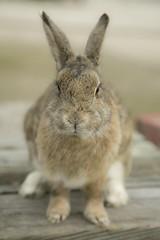 rabbit #6 (Y.Hassy) Tags: rabbit animal