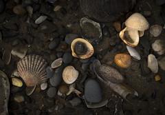 Seashells by the Seashore (shawn~white) Tags: uk sea shells beach nature water wales coast seaside sand westwales place stones cymru shore lowtide ynyslas shawnwhite canon6d