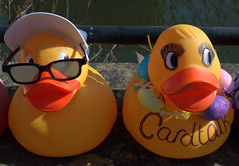 Dressed up ducks for the Ramsbottom Ruck Race 2016 - 6 (Tony Worrall Foto) Tags: county uk england game silly race fun duck costume cool stream tour open place northwest display unitedkingdom many painted country north group ducks competition visit location lancashire plastic area sunlit northern update daft duckrace attraction lancs ramsbottom coolducks welovethenorth