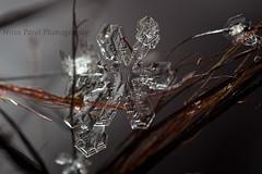 IMG_9367 (nitinpatel2) Tags: macro snowflakes patel nitin