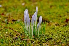 Spring (osto) Tags: denmark europa europe sony zealand scandinavia danmark slt a77 sjlland osto alpha77 osto march2016