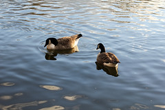IMG_9900 (zafiraahmed) Tags: flowers portrait people plants nature architecture buildings geese pond grunge ducks statues minimal pale minimalism minimalistic sculptures zafiraahmed