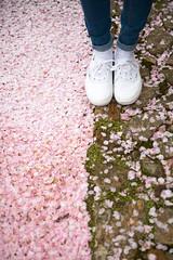 Cherry blossoms -  (Enrico L. ) Tags: travel japan canon cherry rosa compo   sakura cherryblossoms vans 28 petali giappone hanami okayama kurashiki  2470 sfuocato traveljapan fioridiciliegio japanflowers 5dmarkiii blossomsbokeh japanwonders enricolachin enricoeye vansneifiori vansfiori vansjapan viaggigiappone