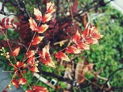 Hanami 2016 (Jon-F, themachine) Tags: plants japan asian asia olympus nagoya  nippon japo oriental orient fareast  aichi nihon  omd   chubu japn  2016 m43  mft  mirrorless  chuubu   micro43 microfourthirds  ft xapn jonfu  mirrorlesscamera   em5ii em5markii  jonfu