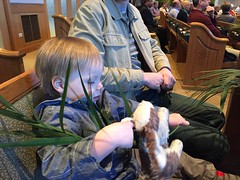 "Paul on Palm Sunday • <a style=""font-size:0.8em;"" href=""http://www.flickr.com/photos/109120354@N07/25983522431/"" target=""_blank"">View on Flickr</a>"