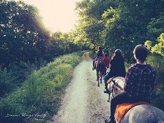 The beautiful journey of today can only begin when we learn to let go of yesterday. (Dreams through Reality) Tags: horses people sun green love nature animals female forest outdoors greek countryside social adventure explore greece journey fade horseriding olympusem10 filmamazing