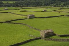 Dale fields (Rich3012) Tags: uk england farm yorkshire farmland fields dales yorks swaledale gunnerside