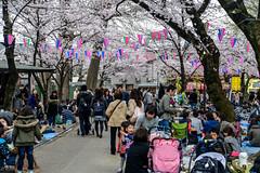 Hanami in Kawagoe (AnotherSaru - Limited mode) Tags: japan japanese spring gathering  sakura cherryblossoms kawagoe hanami  blooming saitamaken  2016   saitamaprefecture kawagoeshi