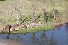Rio de Cavalos (cristiano arnaldo monteiro) Tags: rio cavalos beira sevilha tbua