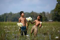 Lotus Picker Smile (Firdaus Zulkefili) Tags: life heritage childhood children village lotus culture lifestyle concept connection villager picker villageboy cheerfull