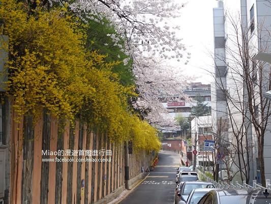 안산공원벚꽃03
