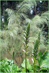 green garden of Fes (mhobl) Tags: park flower green garden morocco maroc fes jardinjnanesbil