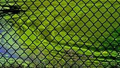 algae take over (donjuanmon) Tags: flowers blue lake black green wire purple fences algae hff fencedfriday donjuanmon