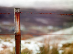 Detail of Barb Wire - Sonnar 250mm (magnus.joensson) Tags: winter skye field zeiss fence silver landscape one scotland wire dof bokeh outdoor c hasselblad minimalism barb phase isle depth nofilter 500cm sonnar p45 250mm