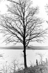 a tree from a dream (Stanislav Trifonov) Tags: blackandwhite lake tree nature monochromatic shore dreamy minimalism