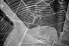 Sandro Duca 000 (Ricomincio da 50mm) Tags: milano bn bianco nero wks biancoenero isola 2016 gf2