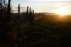 Gold Wire Fence (JasonCameron) Tags: light sunset sun green field grass fence wire warm shine farm grow pasture land homestead barbed
