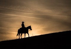 Into the Sunset (Catherine#Page) Tags: ranch horse silhouette evening cowboy