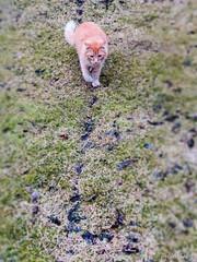 Simbalimbi (Fjola Dogg) Tags: pet pets animal animals cat canon iceland spring europe pad sland kisa kttur gludr simbi 2016 evropa md evrpa rnesssla fjoladogg sland fjladgg rnesssla fjladgg kttur evrpa canonpowershotg7x canong7x padfjoladogg mdfjoladogg simbalimbi gludr