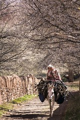 Abyaneh Village, Iran (Onur_Ekmekci) Tags: travel woman village iran traditional elderly vernacular local abyaneh