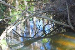 Bothamley stream (Sharron Bowers) Tags: water reflections landscape stream peaceful