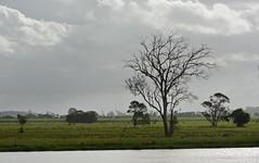 Richmond River (dustaway) Tags: water landscape australia deadtree nsw sugarcane floodplain ruralaustralia northernrivers australianrivers richmondriver richmondvalley richmondriverfloodplains buckendoon