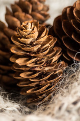 """Begins with the Letter P"" Pinecone - MM (Nadine R*) Tags: macro wool pinecone monday canont5i efs55250mmf456isstm"