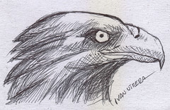aguila a lapicero (ivanutrera) Tags: bird animal eagle drawing ave pajaro draw dibujo aguila lapicero boligrafo dibujoalapicero dibujoenboligrafo