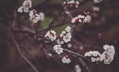 Prima (giorgia.grizi) Tags: flower macro tree home nature canon details natura ambient fiori habitat albero supermacro valledaosta dettaglio mark2