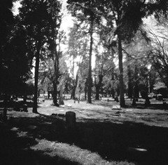 (liquidnight) Tags: film cemetery graveyard analog mediumformat portland death lomo lomography purple toycamera surreal mementomori pdx dreamy analogue tombstones pnw dreamscape mortality filmphotography lonefircemetery lomochrome lomochromepurple lomochromepurplexr100400