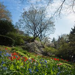 A Garden in Manhattan (CVerwaal) Tags: nyc gardens spring centralpark ricohgr shakespearegarden