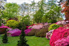 Punch Bowl - Valley Gardens (CAscotPhotography) Tags: flowers trees plants plant flower tree nature garden landscape spring nikon windsorgreatpark valleygardens valleygarden d7100 cascotphotography