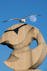 Under Protection (NathalieSt) Tags: moon france lune frankreich europa europe fr francia oiseau languedocroussillon hrault lagrandemotte